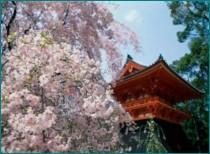 Международные аспекты южнокорейского национализма