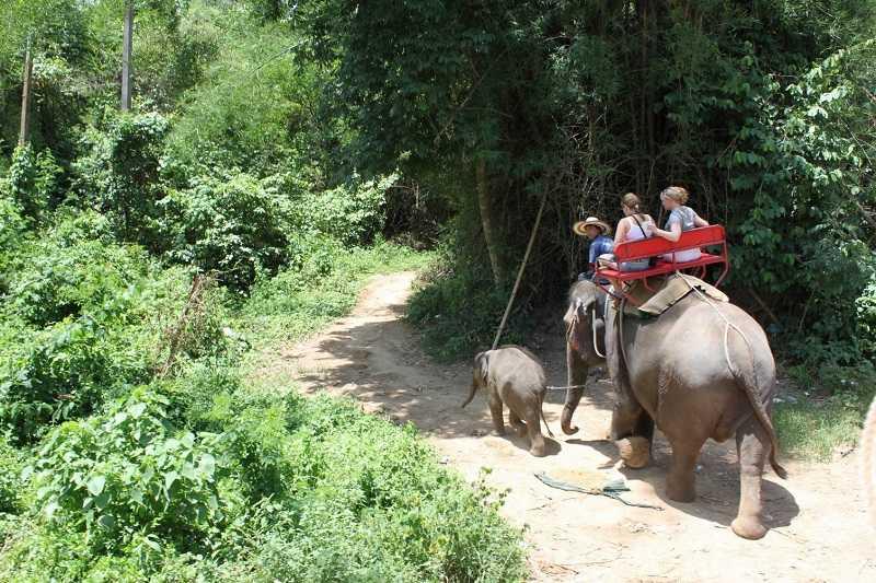 Деревня-ферма слонов: зачем сюда ехать?